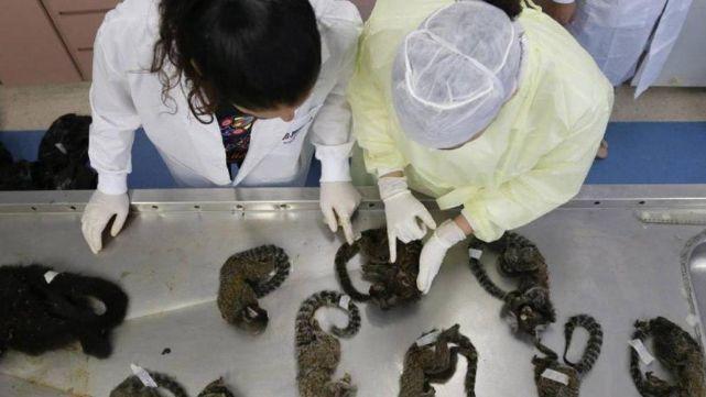 Envenenan y matan a golpes a 131 monos por pánico a la fiebre amarilla