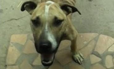 Maltrato animal: Sujeto multado por mantener atada y sin alimento a una perra