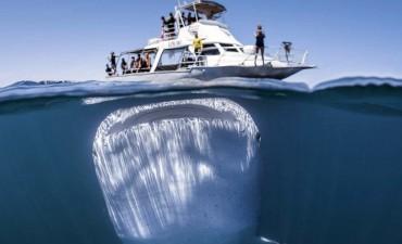 Tiburón gigante: la impactante imagen captada debajo de un barco con turistas