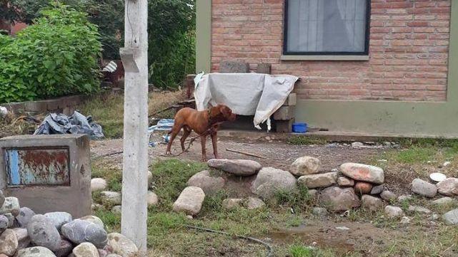 Así pitbull atacó a otro perro y los dueños no se hicieron cargo