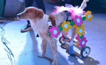 Colorido Desfile de Mascotas en El Aborigen