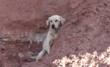 Emotivo rescate de un  labrador que había quedado atrapado en un precipicio