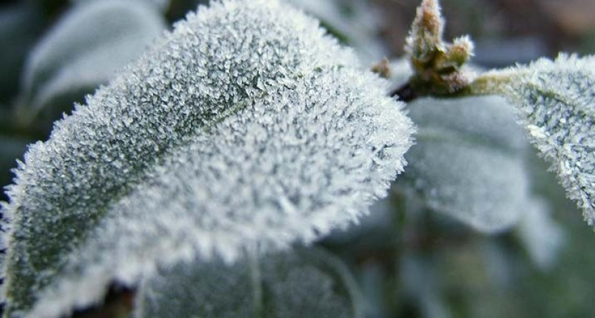 Las primeras heladas del año se dieron en las localidades de Las Juntas, El Rodeo y Aconquija