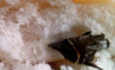 Fiambalá: Encuentran hoja de Coca dentro de un Pan