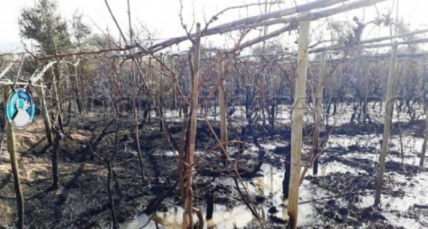 Detienen a un sexagenario por el incendio de varias hectáreas de viñedos
