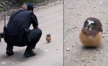 Pichón de lechuza le hizo frente a un Policía