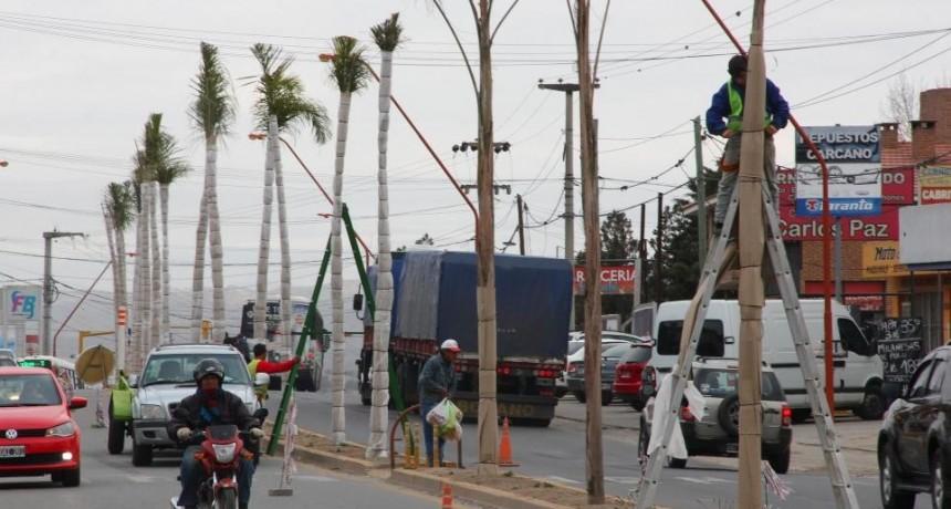 """Por las heladas, en Carlos Paz """"abrigan"""" a las palmeras"""