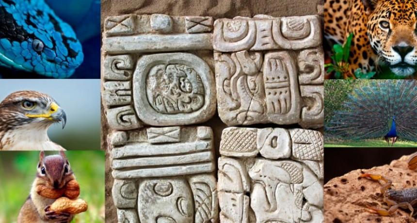 HOY:Descubre cuál es tu signo zodiacal del Horóscopo Maya