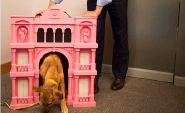 En campaña, Balcarce, el perrito del PRO, estrenó nueva cucha