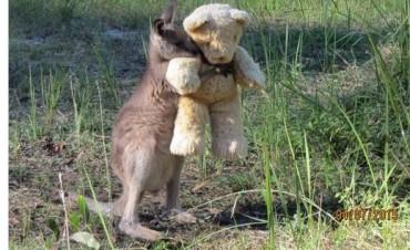 Un cangurito abraza un peluche, conmueve y se hace viral