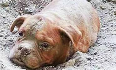 El caso de una perrita enterrada viva escandaliza a Francia