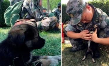 Shenghua, el perrito rescatado de la explosión en Tianjin
