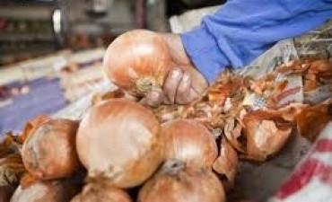 La lluvia disparó el precio de la cebolla recomiendan no comprar
