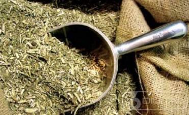 La yerba tiene antioxidantes