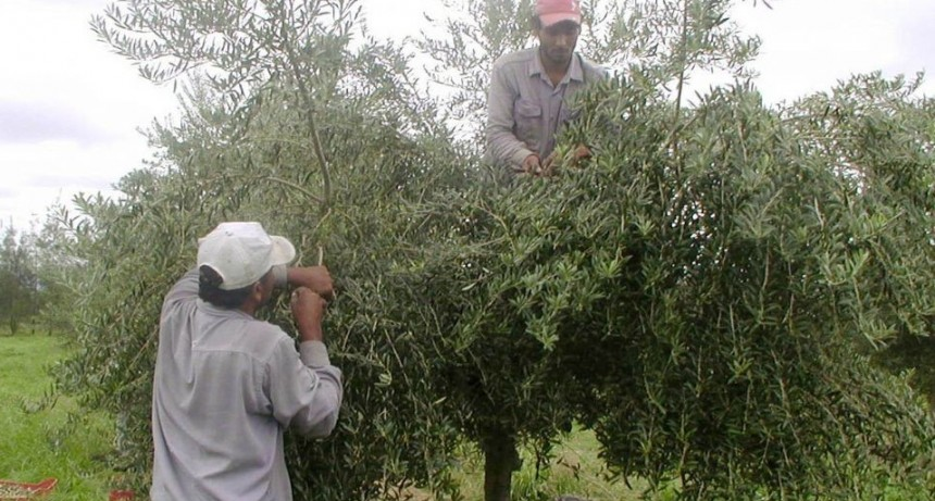 Trabajadores de la empresa olivícola  AGRO OLIVA cortan Ruta 46 por sueldos adeudados