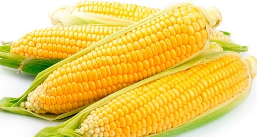 La Anmat prohibió productos alimenticios como choclo, relleno para tacos, entre otros