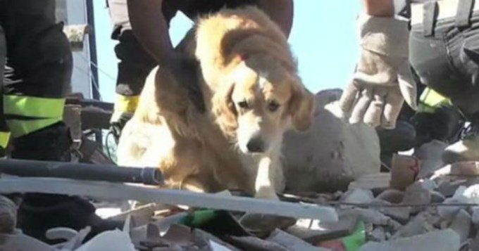 Rescatan a perro 10 días después del terremoto