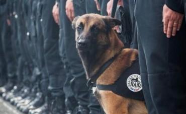 Diesel, el perro héroe de la Policía Nacional muerto en Saint-Denis