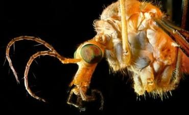 Confirman la primera muerte de un bebé con microcefalia asociada al virus del zika