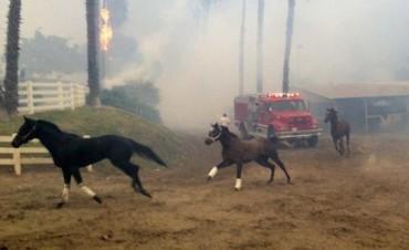 Dramática carrera de los pura sangre contra las llamas en California