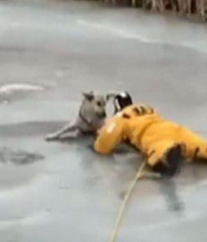 Emocionante rescate de perro atrapado en el hielo
