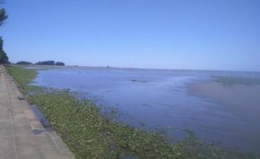 Cerraron la costa de Quilmes por una invasión de víboras