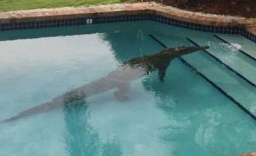 Salió al patio y se encontró con un cocodrilo en su pileta