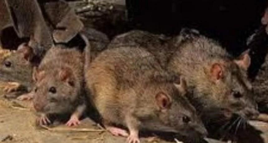 Hantavirus: otro caso positivo y ya suman 24 por el brote