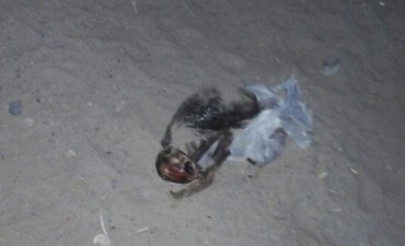 Un cráneo y el cadáver de un extraño aterrorizan a Salta
