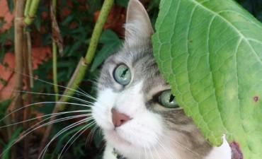 En el Día Internacional del Gato, te contamos: ¿qué dice tu mascota felina sobre vos?