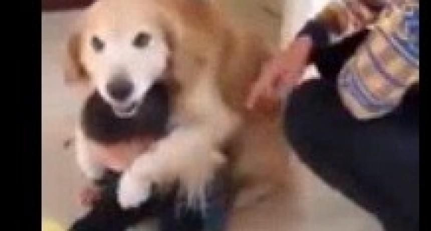 Un perro se vuelve viral al proteger a un niño del reto de su padre