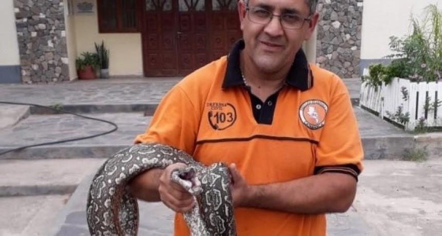 Devuelven a su hábitat, una víbora hallada en Valle Viejo