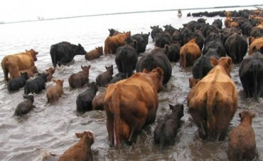 Cordoba, emergencia agropecuaria por inundaciones