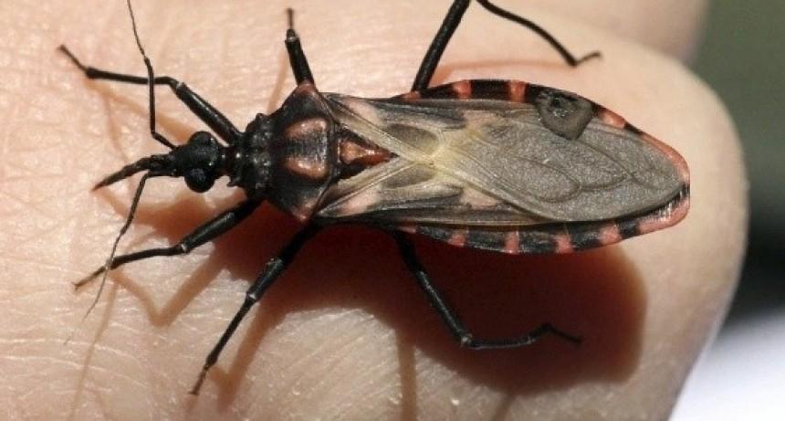 Aprueban un medicamento para tratar el Chagas