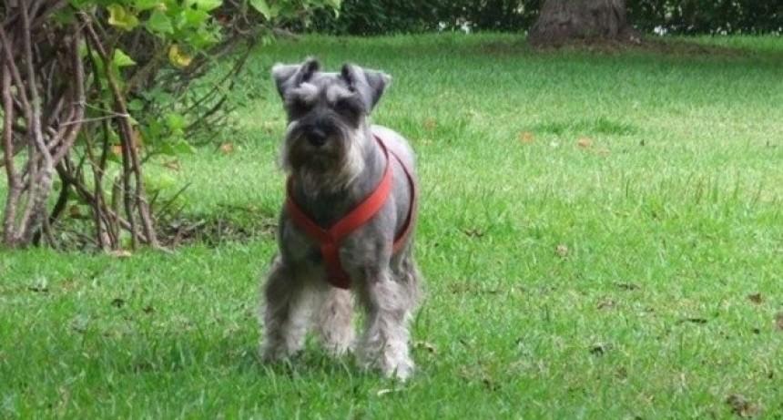 Familia perdió a su perro y ofrece un viaje al Mundial de recompensa