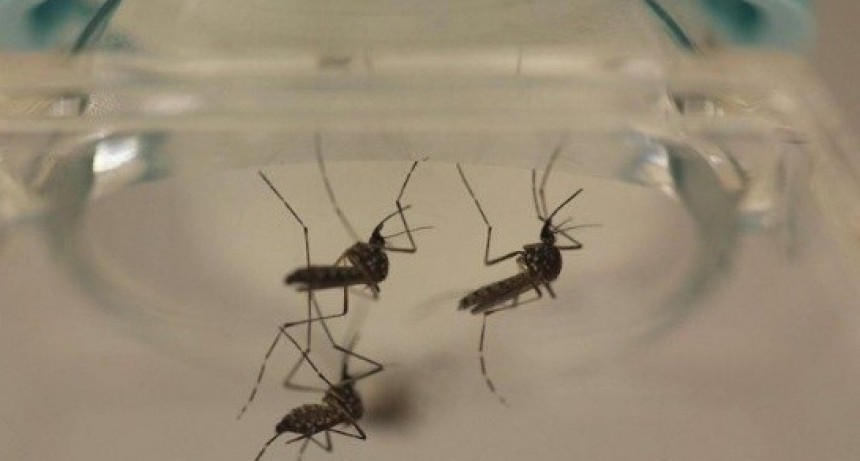 Trabajan para evitar casos de dengue o zika ante el alerta en provincias vecinas