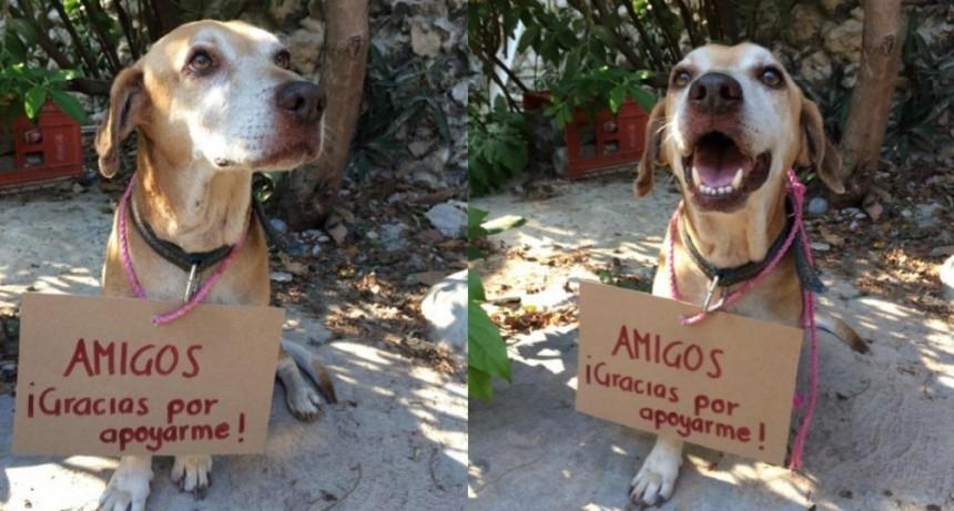 Deko, el perro con cáncer que vende postres en la calle para pagar sus quimioterapias