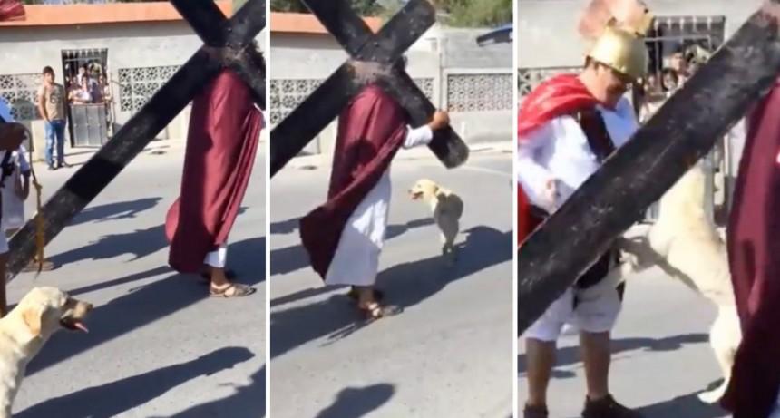 Perro defendió a JESUS durante el Vía Crucis!