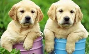 Curiosidades de los perros que quizá no conocías