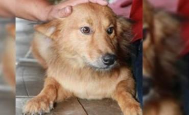 Perro salva a recién nacida arrojada a la basura