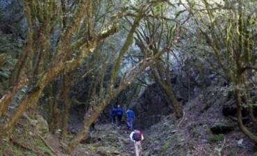 Este domingo 31, caminata a los Bosques de Arrayanes
