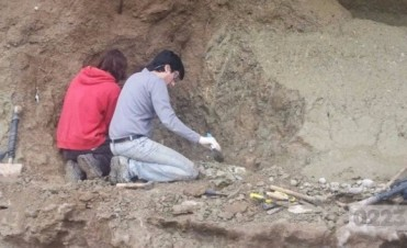 Encontraron los restos de un mastodonte de casi un millón de años