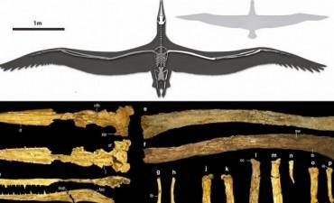 Científicos argentinos hallan restos de un ave de hace 50 millones de años