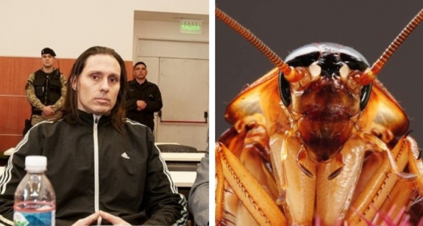 Ibar Pérez Corradi soltó cucarachas en un juicio oral y decidieron suspender la audiencia