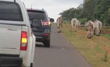 Imputados por Impedir que la Policía se lleve Animales Sueltos