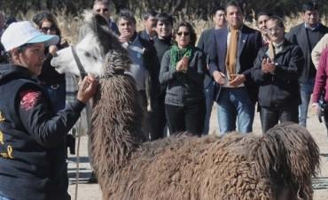 Primera Feria de la Llama y el inicio del Inti Raymi en Santa Maria