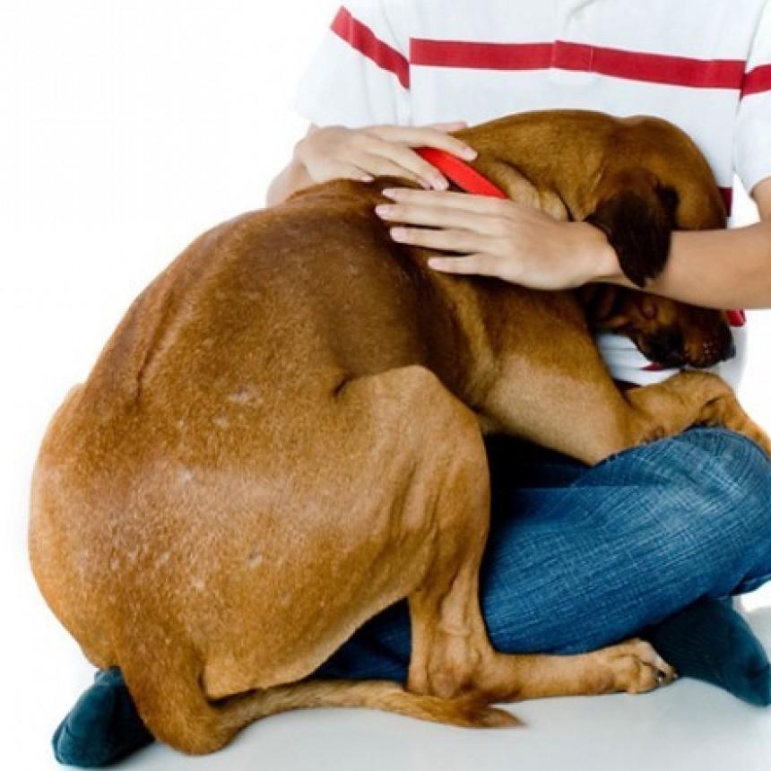 5 conductas que cambian en un animal adoptado