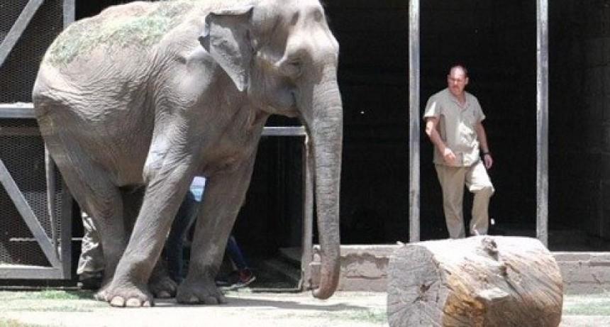 El país entero llora la muerte de la elefanta Pelusa
