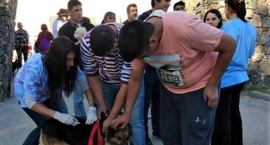 Zoonosis realizó vacunación y desparasitación de perros en el Oeste de la Capital