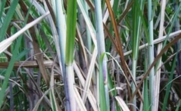 Hongos misioneros nueva alternativa para producción de bioetanol
